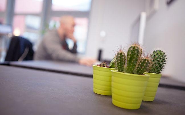 cactus coworquie